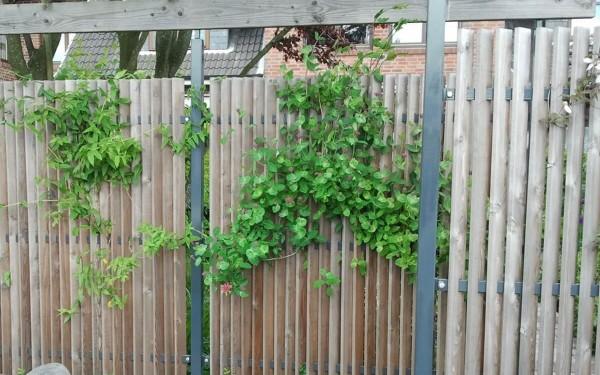 Sichtschutz im Reihenhausgarten 5